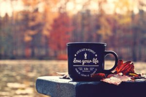 autumn, forest, cup